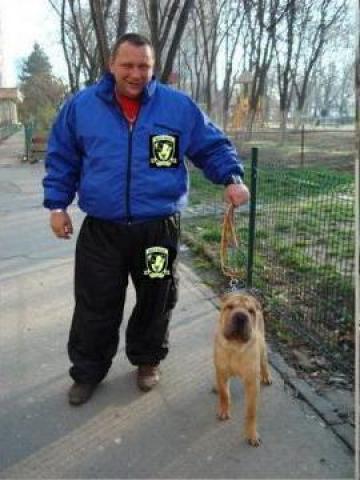 Dresaj canin de calitate