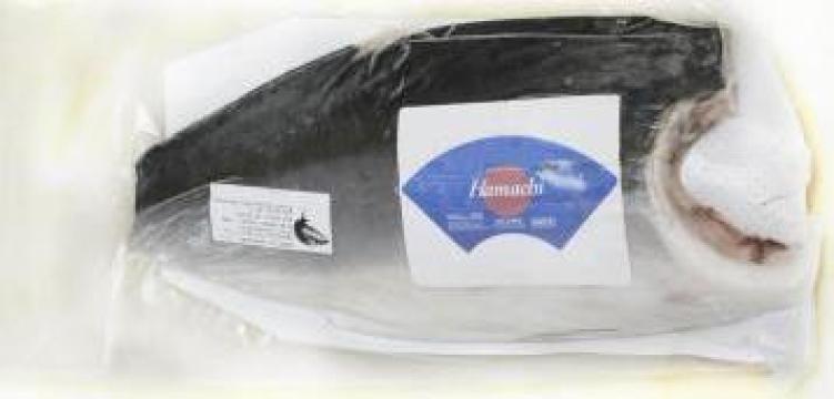 Peste File yellowtail kingfish (hamachi) congelat