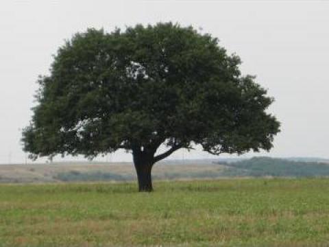 Produse biodegradabile pentru protectia mediului