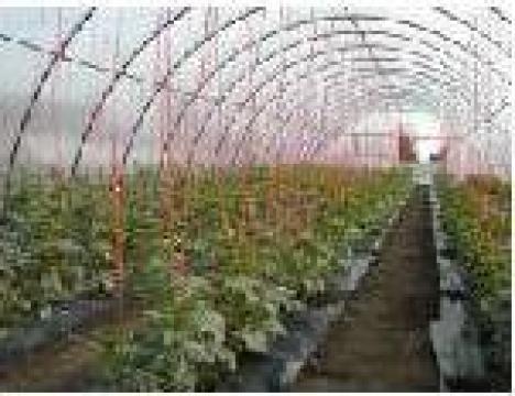 Solarii pentru legume si flori