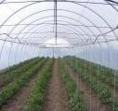 Solarii profesionale pentru legume