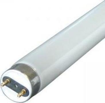 Tub neon fluorescent T8 36W
