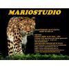 Mario Studio Production